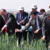 Buğdayı 1 Milyon Faydalı Böcek Koruyacak